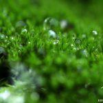 Газонная трава: какая лучше?